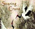 Soaring Crane Chi Kung
