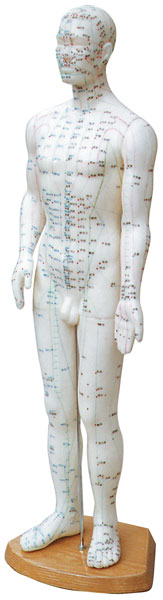 """Acupuncture Human Model: 24"""" Male"""