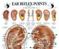 Ear Reflex Points Chart