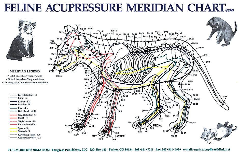 Feline Acupressure Meridian Chart